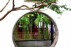Praxis-Traditionelle-chinesische-Medizin-Koeln-Sabine-Schmitz-Mondtuer-041