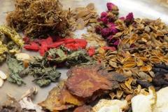Praxis-Traditionelle-chinesische-Medizin-Koeln-Sabine-Schmitz-kraeuter-059