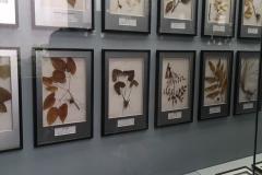 Praxis-Traditionelle-chinesische-Medizin-Koeln-Sabine-Schmitz-museum-072