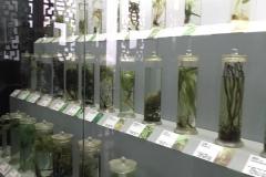 Praxis-Traditionelle-chinesische-Medizin-Koeln-Sabine-Schmitz-museum-073