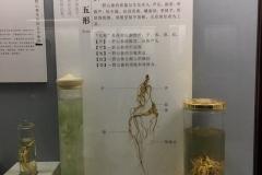 Praxis-Traditionelle-chinesische-Medizin-Koeln-Sabine-Schmitz-museum-074